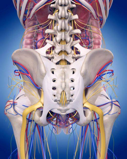 股関節神経